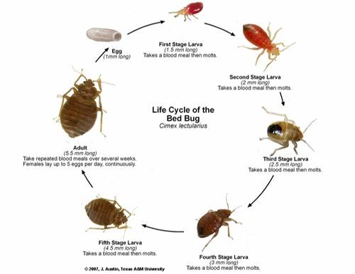 Bugs A Smart Pest Control 365pest Com Www 365pest Com